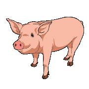 Baconfest Mascot: Sunny